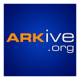 ARKive's picture