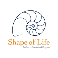 Shape of Life's picture