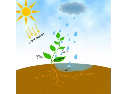 Main picture of Photosynthesis
