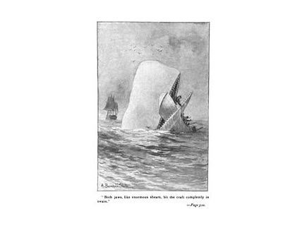 Main picture of THE WHALE STORY