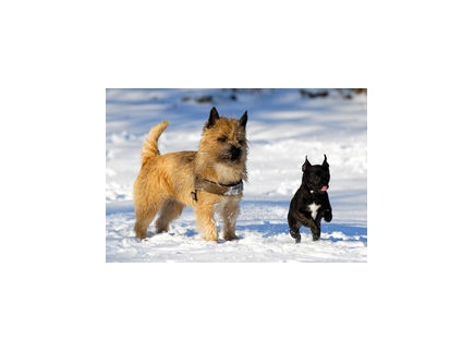 Main picture of Fenway and Hattie A Novel Hyperdoc template for Teachers, Parents and Students
