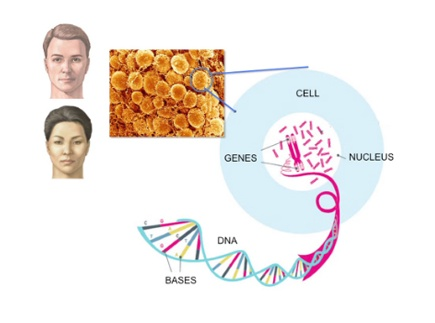 Main picture of From Teenage to Old Age: How Cancer Develops Over Time