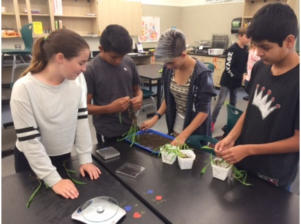 Main picture of Photosynthesis Engineering Performance Task - Carbon Sequestration