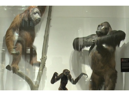 Main picture of Meet the Family: Investigating Primate Relationships