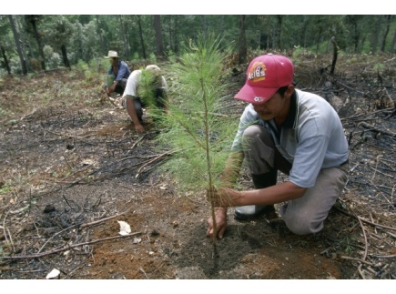 Main picture of Reforestation: Impact on Climate