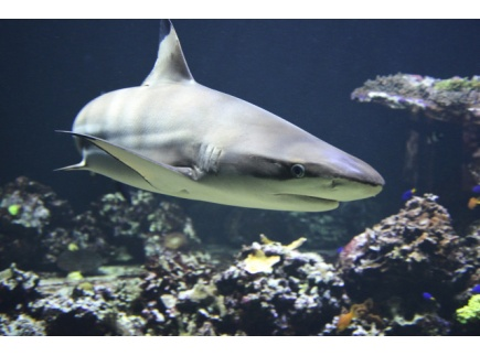Main picture of Shark Fact sheets
