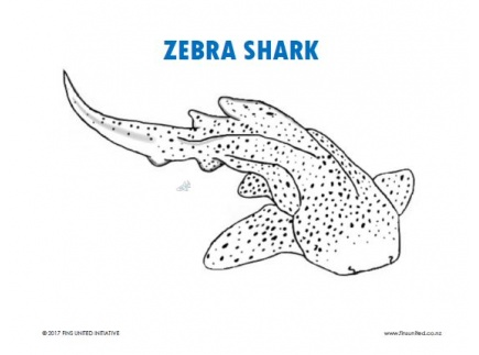 Main picture of Zebra Shark Coloring Page