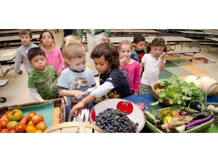 Main picture of Health, Nutrition and Wellness Strategies for Your School and Community