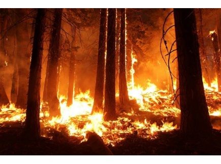 Main picture of The Heated Discussion of Climate Change and Wildfires
