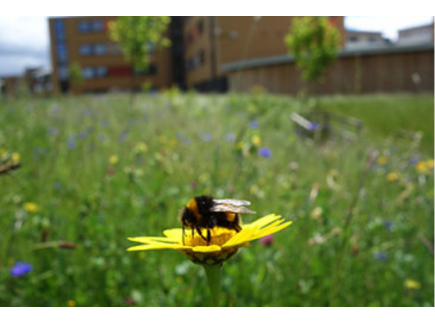 Main picture of The Buzz on Urbanization and Pollination