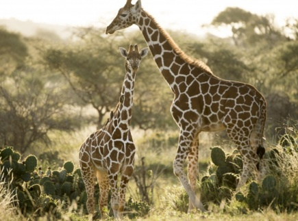 Deserts and Grasslands of Africa - Virtual Trip