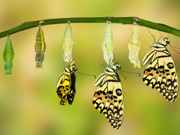 Make your own butterfly feeder