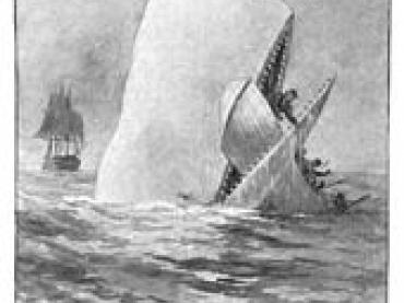 THE WHALE STORY