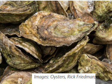 Ocean Acidification: Local Risks and Solutions