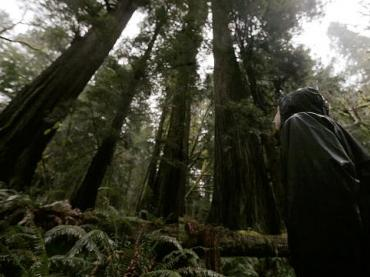 Protecting Wilderness | Global Oneness Project