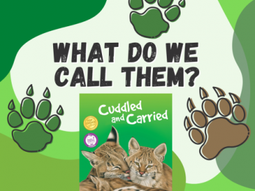 """What Do We Call Them? from """"Cuddled and Carried"""""""