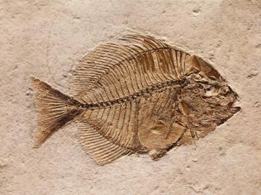 Fossil Record - Legends of Learning