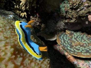 VIDEO: WHAT ANIMALS LIVE IN A CORAL REEF?