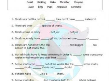 Shark Knowledge: Fill In the Blank