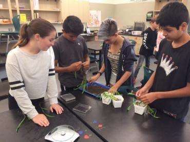 Photosynthesis Engineering Performance Task - Carbon Sequestration