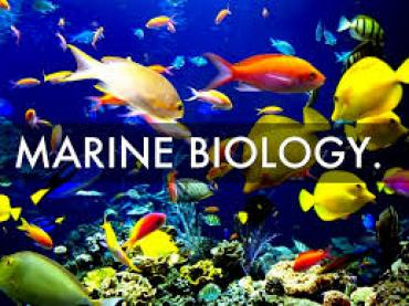 Want to be a marine biologist?  Step 1 for anyone: