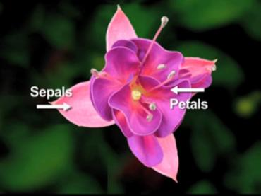 Pollination: Saying It with Flowers