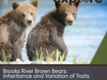 Brooks River Brown Bears: Investigating Inheritance and Variation of Traits with explore.org live cams