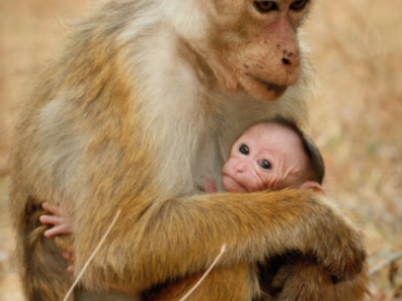 Welcome to Disneynature's Monkey Kingdom