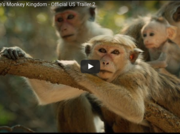 Monkey Kingdom - Official US Trailer 2