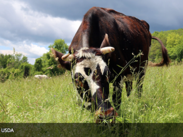 Lesson Plan: Sustainable Livestock