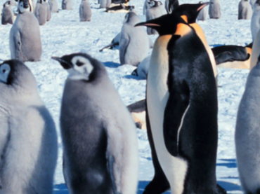 Lesson Plan: The Emperor Penguin's Egg