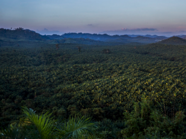 An overlook of the Yuzana Palm Oil plantations.