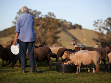 Mimi Luebbermann with her sheep at Windrush Farm in Petaluma, CA.