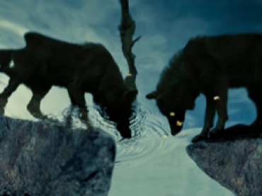 The Man and the Wolf | Global Oneness Project