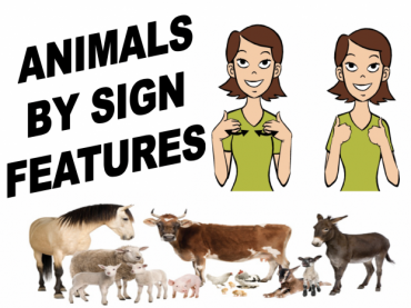 Sign Language animals based on characteristics