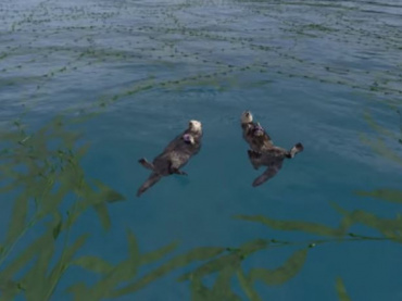 Video: Take a Virtual Dive in a Kelp Forest