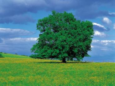 """INSPIRATIONAL SONG - """"THE TREE OF LIFE"""""""
