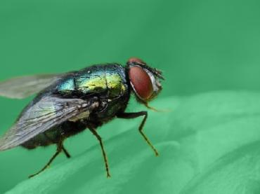Fly on an object