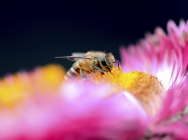 Bee Detective: Discover the Culprit Behind Declining Bee Populations