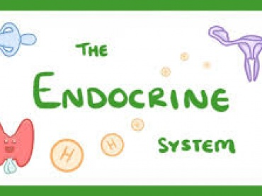 Human Endocrine System | Hormones & Glands with their functions