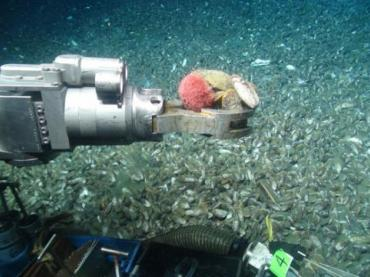 ROV arms are highly specialized devices.