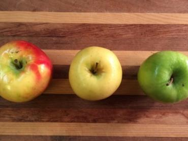 Examining Plant Cell Structure: Mushy Apple Investigation