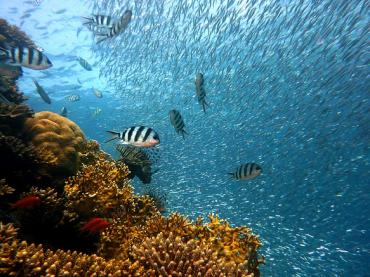 Using marine biology 'behind the scenes' to inspire broad interest in STEM