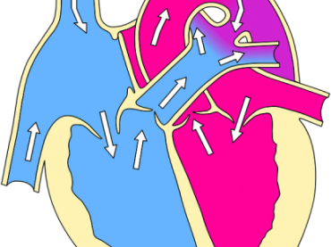 Human Heart Structure and Functions