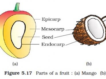 Biology-The seed