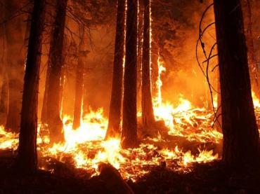 The Heated Discussion of Climate Change and Wildfires
