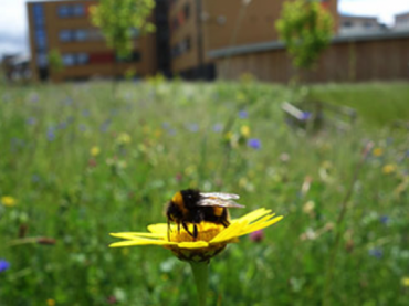 The Buzz on Urbanization and Pollination