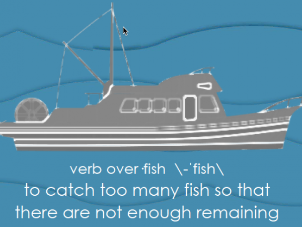 Bycatch and Overfishing Posters