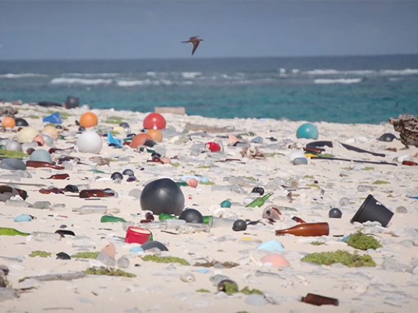 Healthy Oceans: Preventing Plastic Pollution