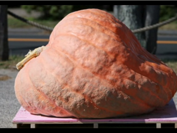 Physics of Giant Pumpkins Video